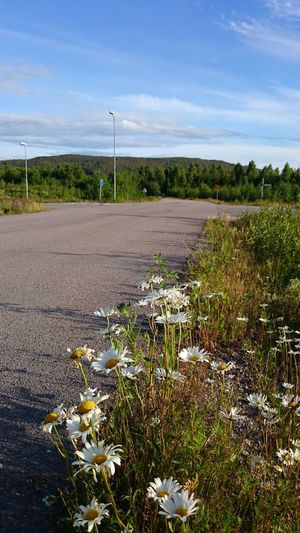 Flower Day Outdoors No People Beauty In Nature Nature Sweden Örnsköldsvik Köpmanholmen