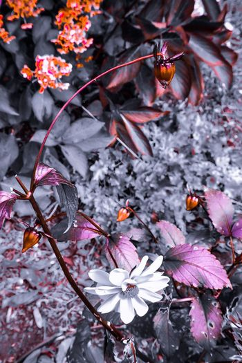 Art Is Everywhere Imagination Collection Abstract Nature Creative Edit Flower No People Nature Beauty In Nature Plant Leaf Petal Springtime Close-up Outdoors Growth Red Fragility Freshness Tree Branch Day Flower Head