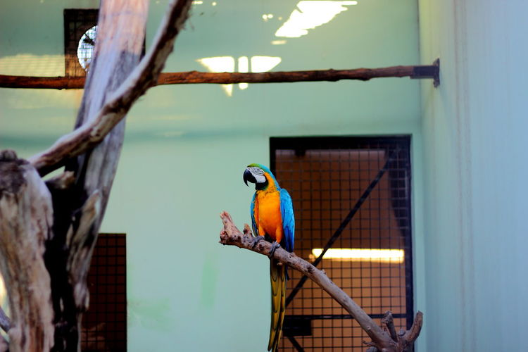 Parrots Bird Parrot Animal Wildlife No People Beauty In Nature Prison Outdoors
