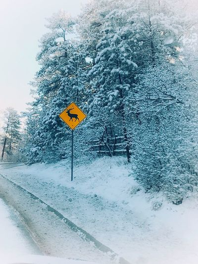 Snow in the mountains Winter No People Nature Cold Temperature Snow Representation Summer Road Tripping Day Outdoors Beauty In Nature