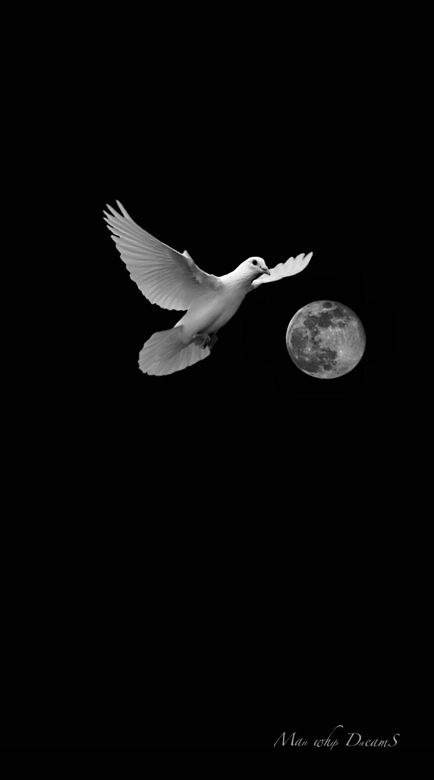 flying, spread wings, animal, vertebrate, animal themes, bird, animals in the wild, animal wildlife, moon, one animal, copy space, black background, motion, mid-air, nature, sky, no people, night, studio shot, full length, full moon, dark, seagull, planetary moon