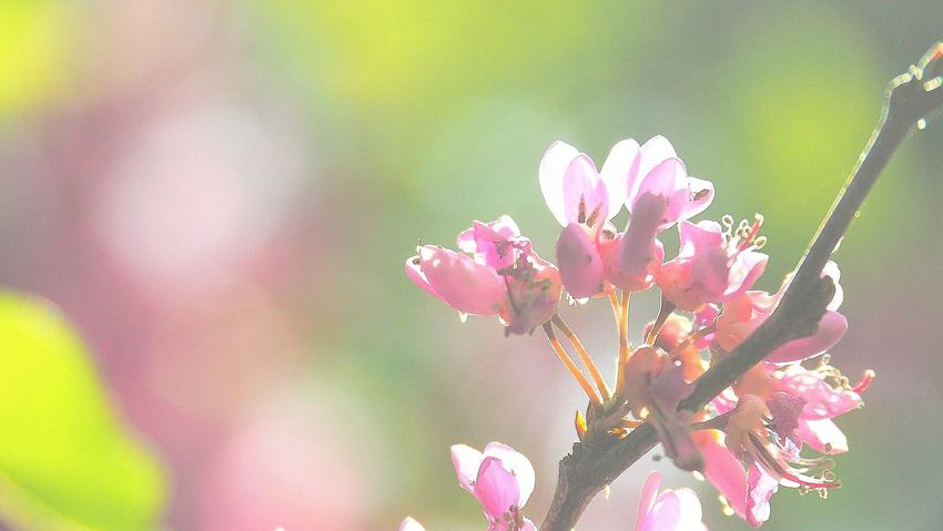 Primavera Flower Pink Color Fragility Nature Beauty In Nature Growth Petal Freshness Day Close-up Plant No People Outdoors Flower Head Springtime Eyeem Market Eyem Gallery Eyeem Photography Eyeemphoto Multi Colored Nature Sunlight