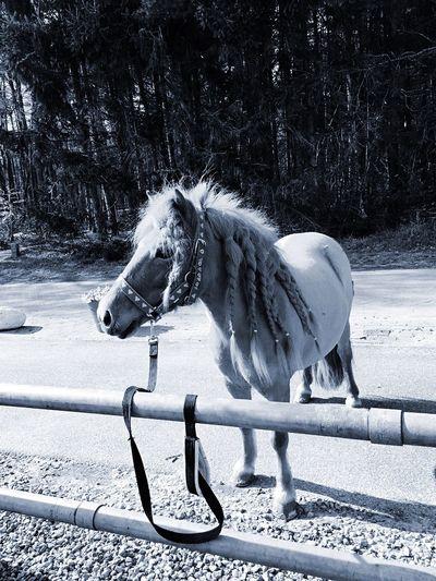 Wonder mijn mooie Lieve pony ❤️🔆 First Eyeem Photo