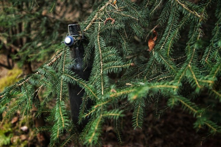 Close-up of bottle in tree