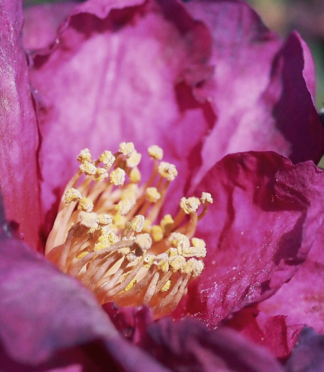 Close-Up Of Wilted Pink Flower Outdoors