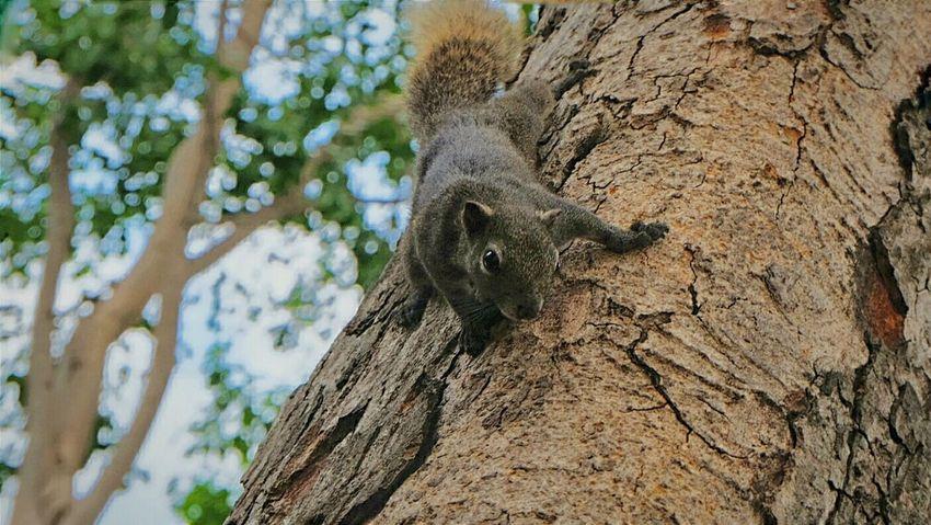 Kpstoryʢ•ᴥ•ʡ First Eyeem Photo Nature Park Squirrel