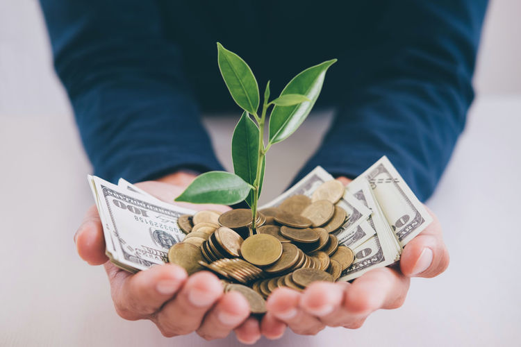 Cropped hands holding currency and plants