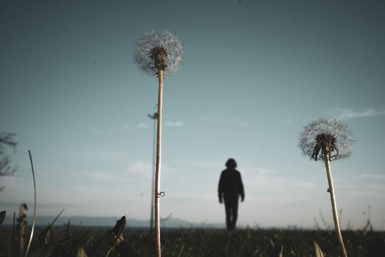 Dandelion on field against sky