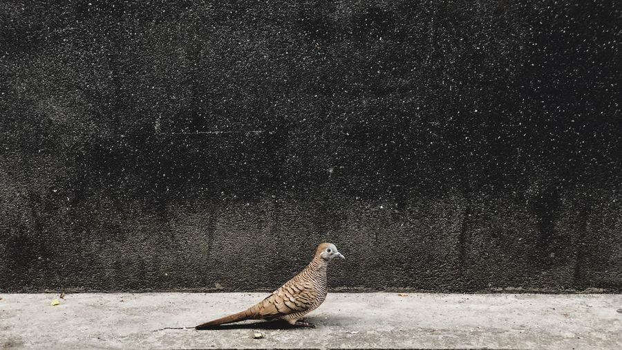 Side view of a bird on the wall