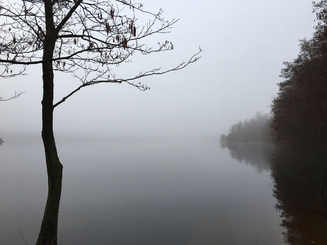 I love fog! Beauty In Nature Day EyeEmNewHere Fog Lake Landscape Mist Nature No People Outdoors Scenics Sky Sweden Sweden-landscape Tranquil Scene Tranquility Tree Water