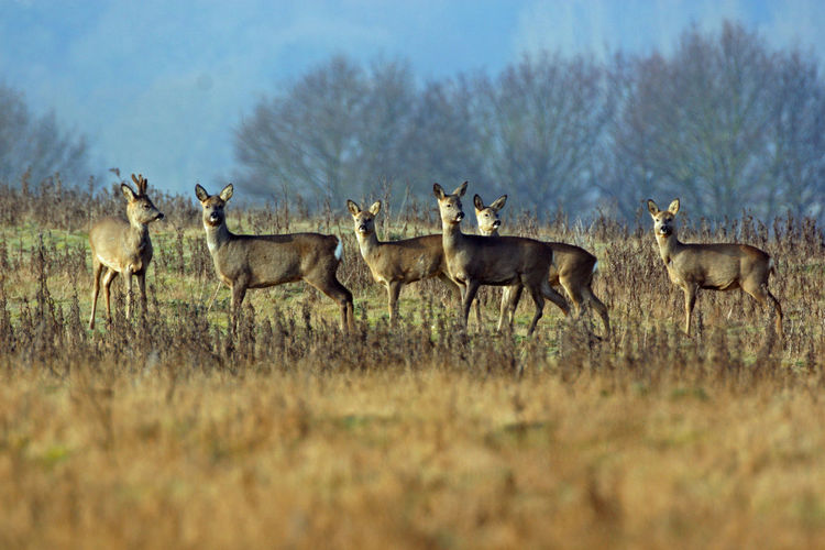 Group of deer in the wild