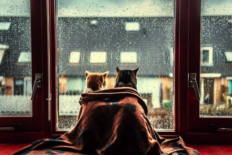 Winter Nächte 😌