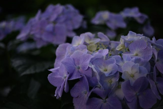 Flowers Nature Flower Beauty In Nature Nature Flower Head Agisai Quintaflower Flower Collection