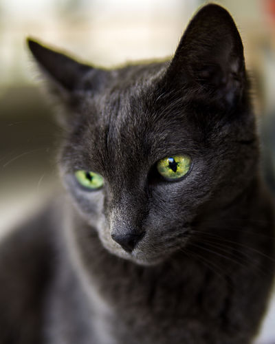 Green Color One Animal Pets Domestic Cat Portrait Close-up Mammal Day