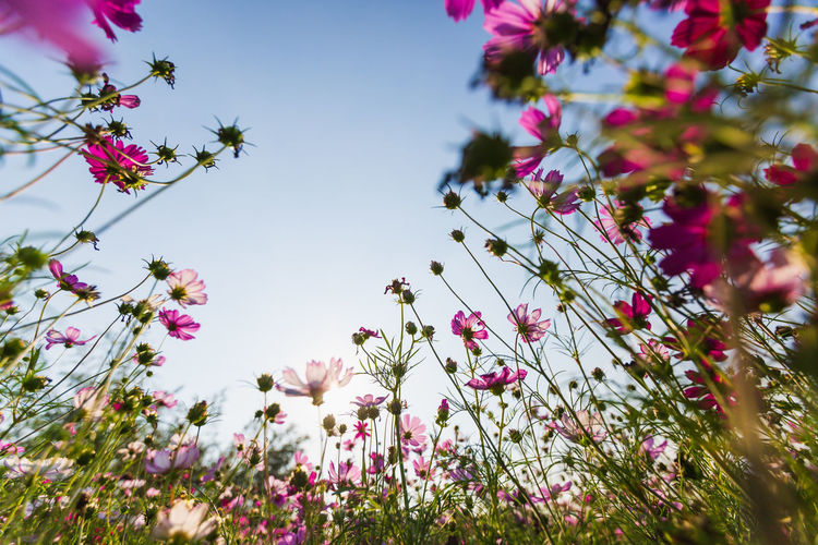 Low angle view of pink flowering plant against sky