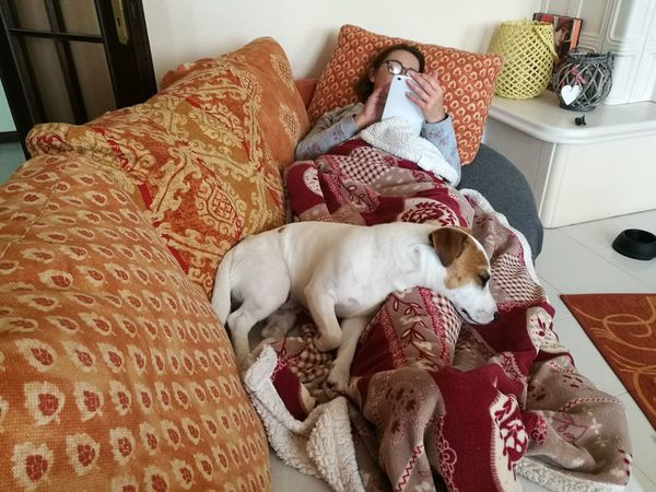 Pets Home Interior Domestic Animals Living Room One Woman Only Domestic Life
