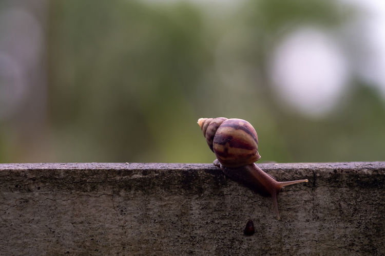 Close-up of snail perching on retaining wall