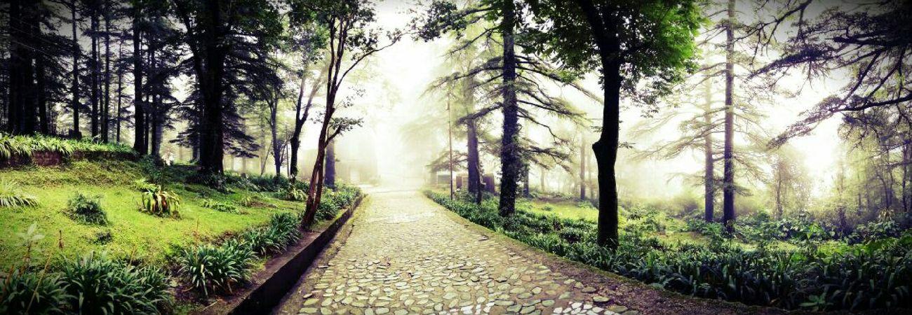 Himachalpradesh India Dharamsala McLeod Ganj Dharamshala Fog Morning Church Scary EyeEmNewHere