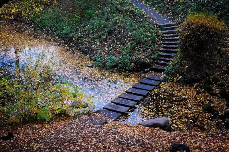 Nature High Angle View No People Staircase Footpath Tranquility Direction Growth The Way Forward Steps And Staircases Stepping Stone