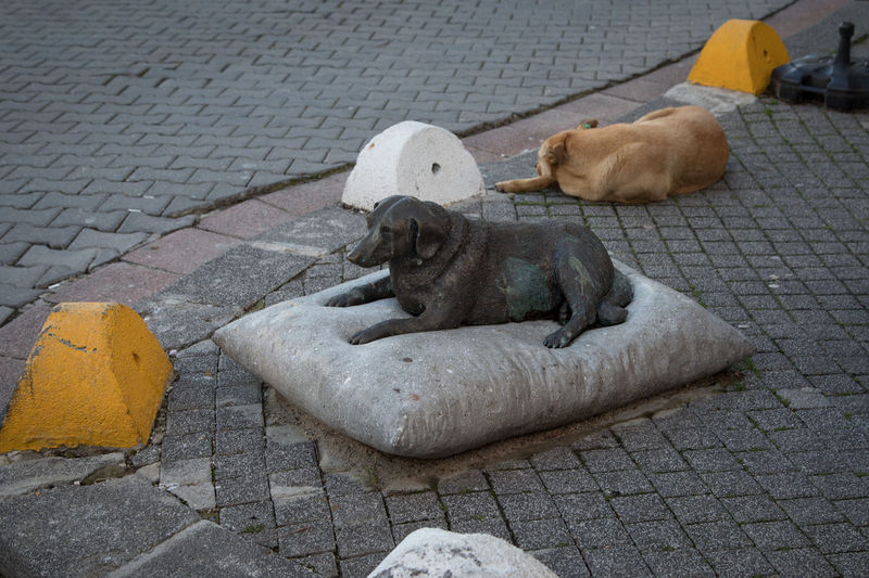 Monument Dog Homeless Mammal Footpath Animal Domestic Animal Themes Domestic Animals Pets Canine No People City Sidewalk Street One Animal Representation Sculpture Cat Day Stone Relaxation Paving Stone