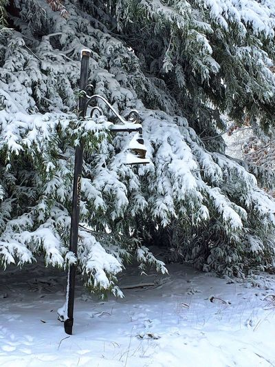 Winter scenery. Snow Winter Cold Temperature Tranquility Outdoors No People Day Tree Snowy Trees Pacific Northwest  Winter's Beauty Wintertime PNW