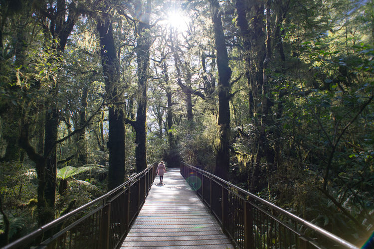 Wooden bridge in the beech forest at new zealand national park. the chasm.