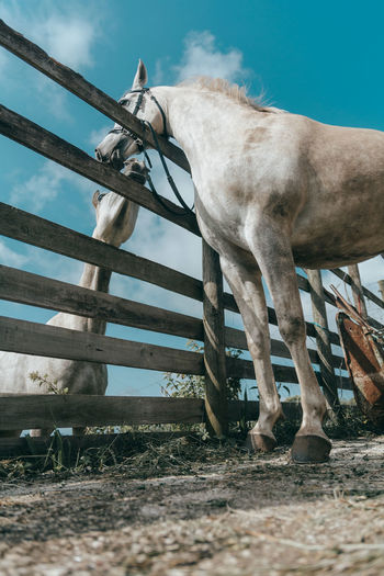 Low angle view of horse on field against sky