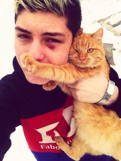 кошка моя киса Вася кот рыжий кот миленький Cat