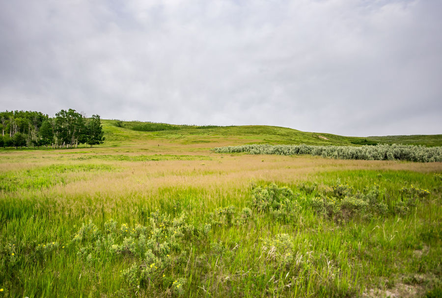 Beautiful Summer day in Glenbow Ranch Provincial Park, Cochrane, Alberta, Canada. Alberta Beauty In Nature Canada Cloud - Sky Cochrane Cochrane, Alberta Day Field Glenbow Ranch Provincial Park Grass Green Color Landscape Nature No People Outdoors Scenics Sky Tree