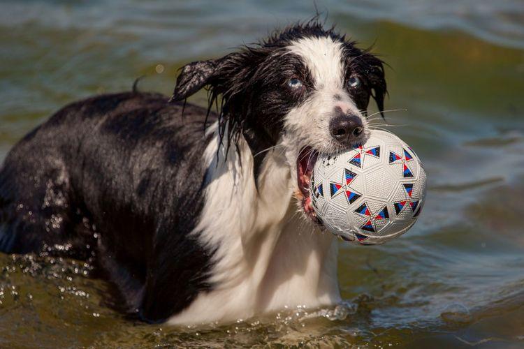 Close-up of dog in lake