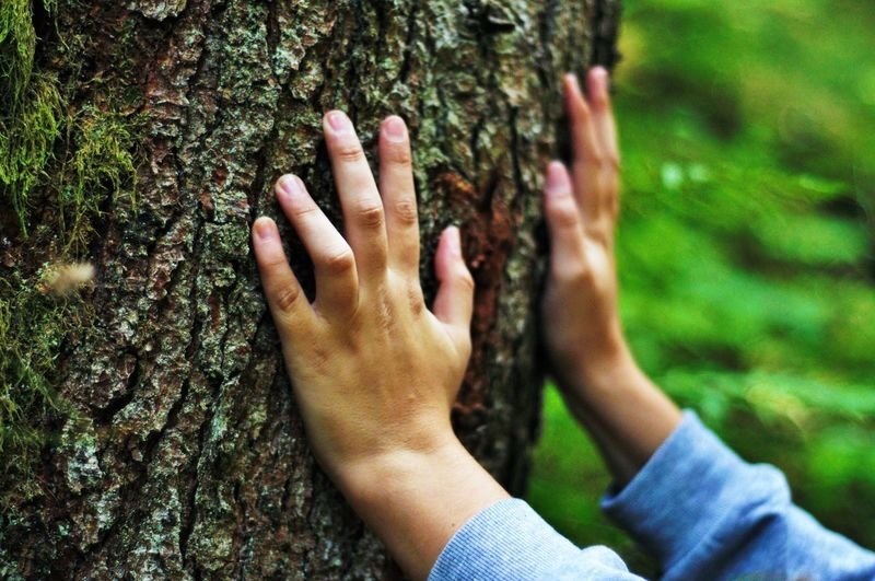 Cropped hands of woman touching tree trunk