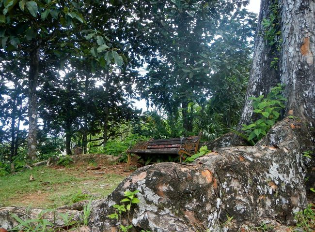 Bench Forest Non-urban Scene Old Tranquility Tree Diversity Natural Beauty Travel Destinations Vacations Scenics Outdoors Old But Awesome EyeEm Best Shots Seychelles Mahagony TreePorn Mahé Miles Away Breathing Space Been There.