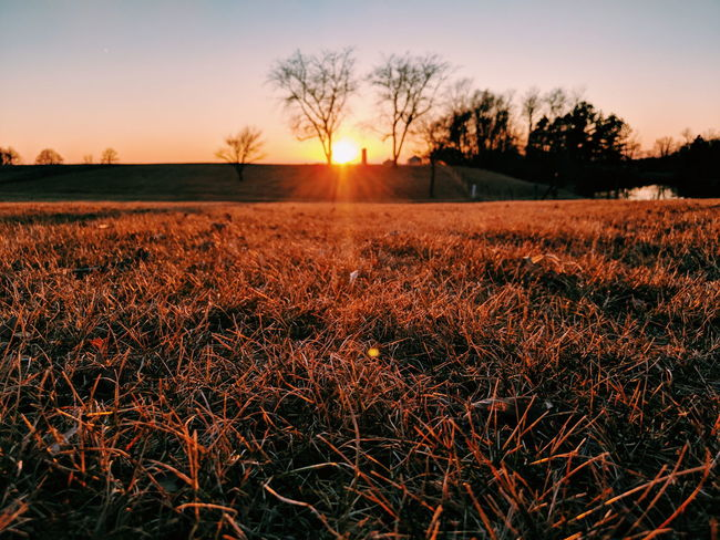 Sunset Grass Close-up Farm Landscape Rural Field Trees Skyline Sky Beauty In Nature