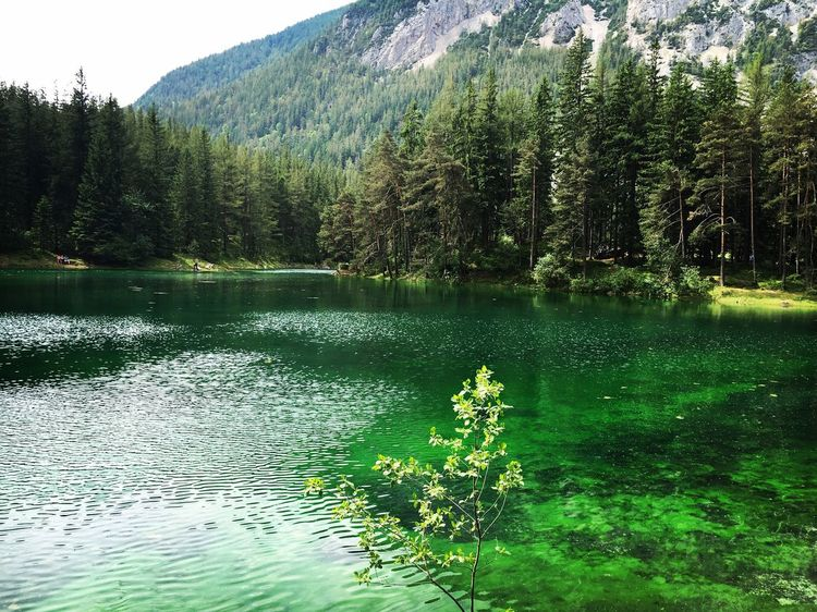 Tree Water Nature Lake Scenics Beauty In Nature Mountain Green Color Outdoors Tranquility Tranquil Scene Forest Day No People Reflection Growth Pine Tree Travel Destinations Landscape Grass greenlake
