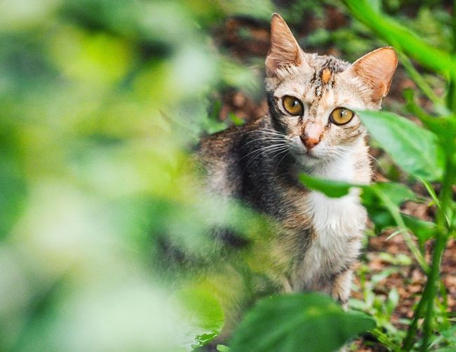Domestic Cat Pets One Animal Feline Animal Themes Portrait Looking At Camera Domestic Animals Mammal Green Color Day No People Outdoors Nature Close-up