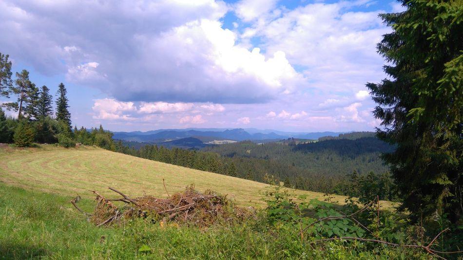 Polska Beauty In Nature Cloud - Sky Day Field Grass Landscape Mountain Mountains Nature No People Outdoors Pieniny Sky Tranquil Scene Tranquility Tree Trzy Korony