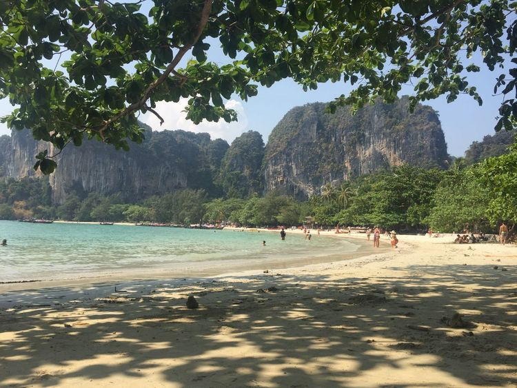 Thailand Krabi Phi Phi Thailand Beach Thai Beach Thailand Mountain Tree Nature Beauty In Nature Scenics Vacations Outdoors Travel Destinations Beach