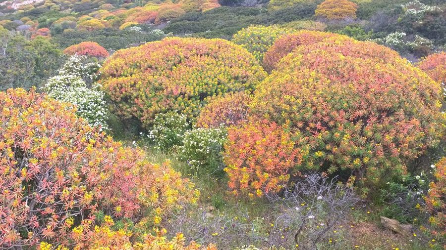 Growth Nature Beauty In Nature Macchia,mediterranea