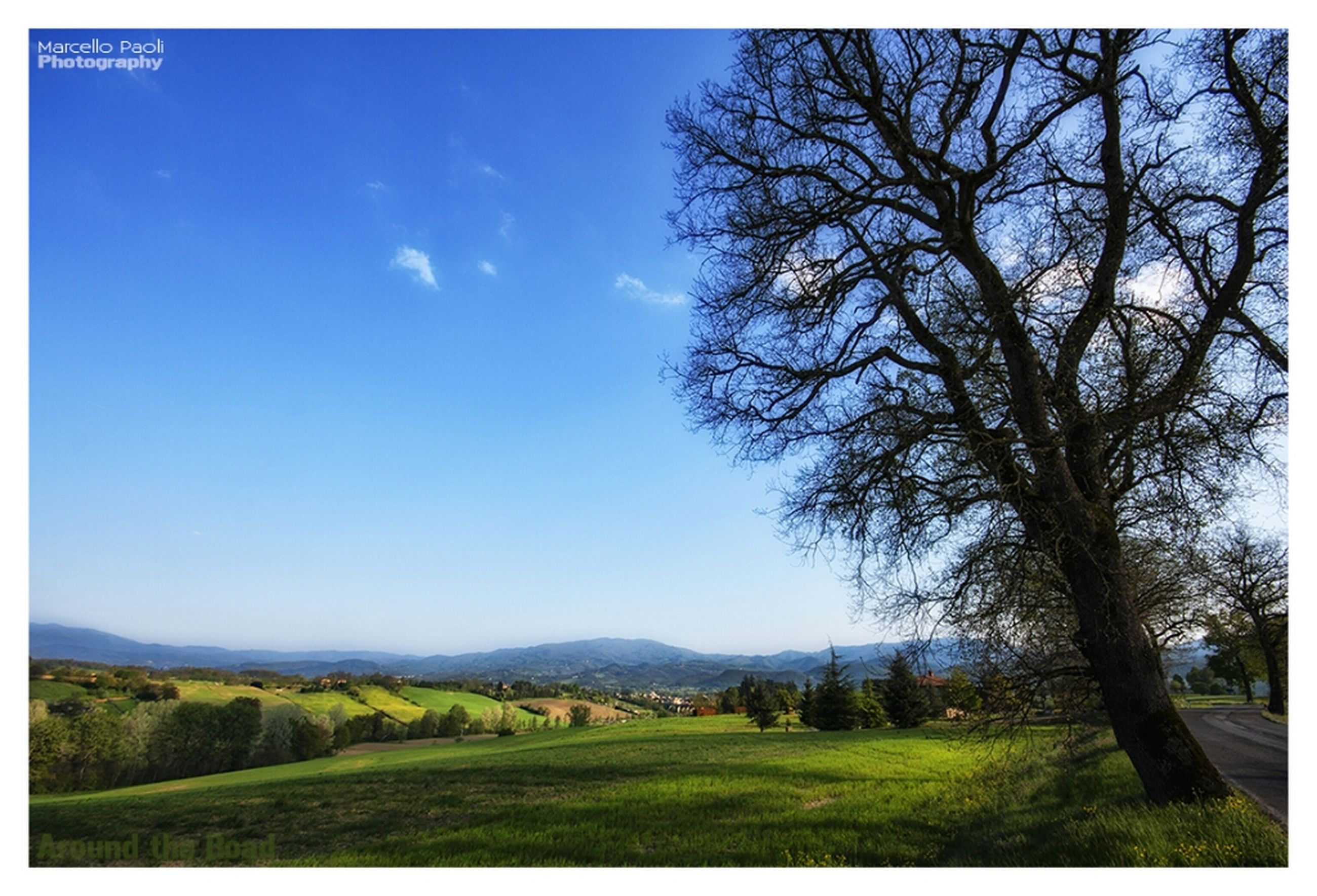 transfer print, tree, tranquil scene, landscape, tranquility, auto post production filter, scenics, field, beauty in nature, grass, nature, sky, clear sky, blue, growth, countryside, non-urban scene, horizon over land, bare tree, solitude