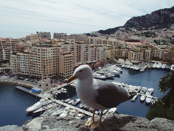 Monaco Monte Carlo Monte Casino Monte Carlo Hotel Bird Architecture Built Structure City Animal Themes Building Exterior Animals In The Wild Water One Animal Residential Building Travel Destinations Sky Sea Bird Day No People Outdoors Nature Cityscape Beauty In Nature