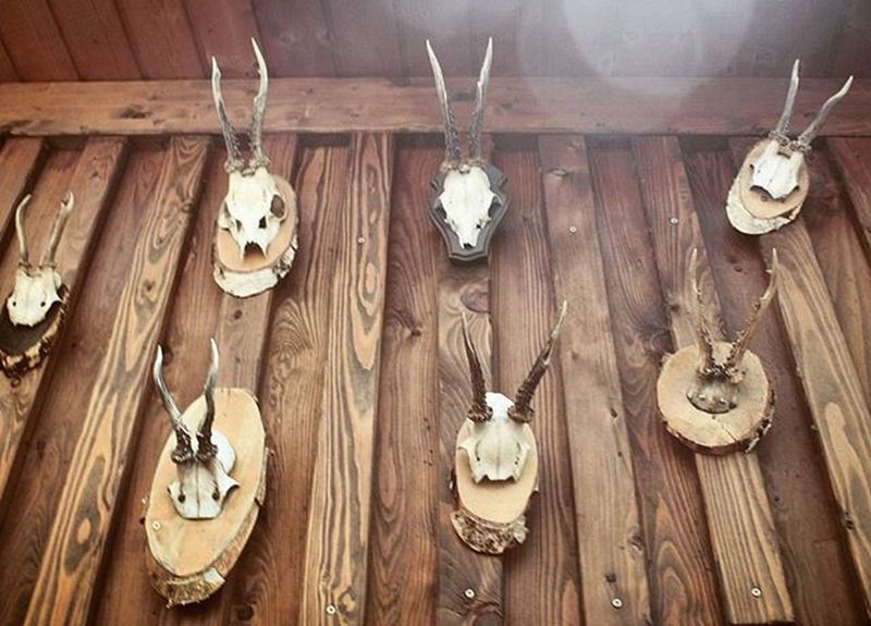 Beautiful Animal Skulls Trophies . Inside the WeltenburgerAmDom Restaurant near the Cathedral DomStPeter Church Kirche . In the Oldcity Altstadt Citycenter . Regensburg Germany Deutschland . Taken by my Sonyalpha DSLR Dslt A57 . مطعم  كنيسة ريجنزبرغ المانيا