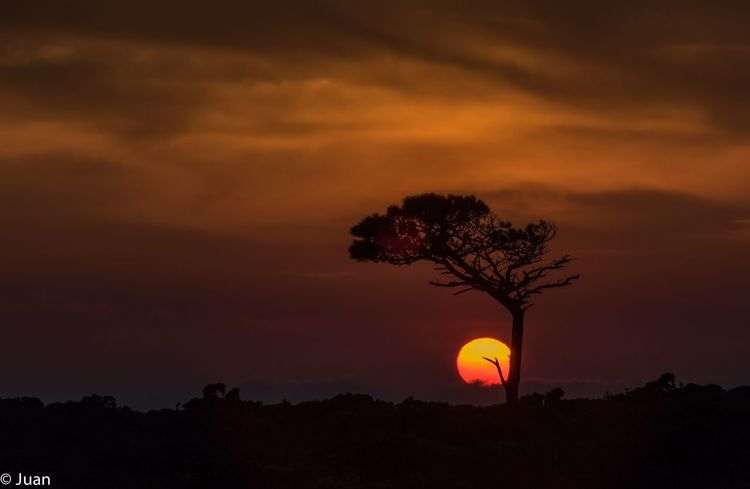 Nature Sky Silence Of Nature Tree Tree Trunk Silhouette Tree Area Forest Moon Orange Color Pinaceae