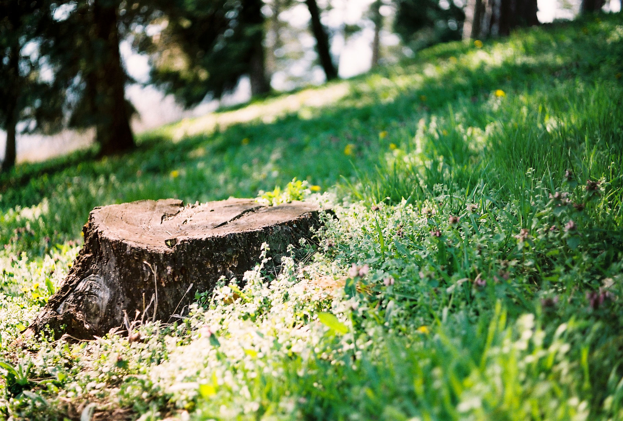 green, grass, plant, lawn, nature, tree, woodland, leaf, land, day, flower, no people, forest, natural environment, garden, outdoors, sunlight, meadow, selective focus, autumn, field, growth, beauty in nature, wood, tranquility, tree trunk, rural area, environment, wildlife, focus on foreground