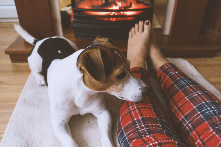 Low Section Of Woman Relaxing By Dog On Rug At Home