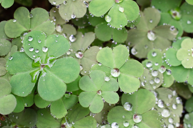Beauty In Nature Drop Fragility Freshness Gleen Green Color Leaf Nature RainDrop Water Wet