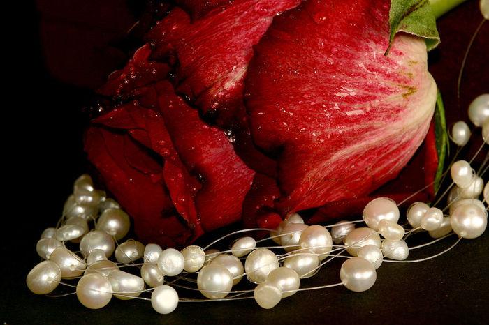 2 Naturschönheiten Close-up Freshness No People Perlen Perlenkette Red Rose🌹 Rot Schmuck Studio Shot
