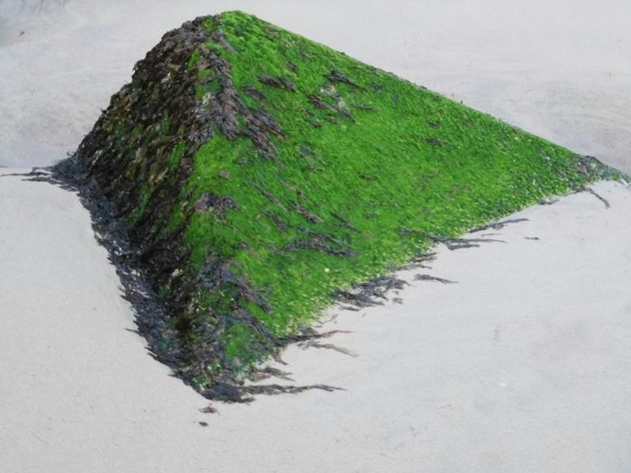 Green Colors Seaweed Pyramid Deceptively Simple
