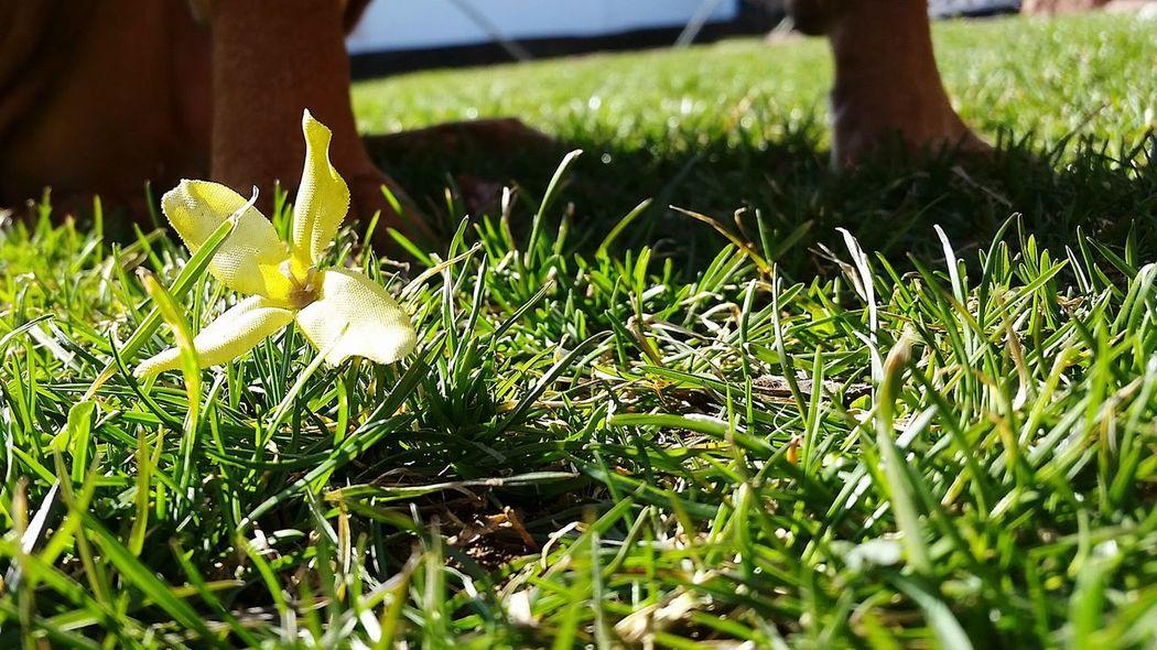 Lemon Lime By Motorola Naturelovers Nature Motherearth Flower Greenery Grass Learn & Shoot: Layering