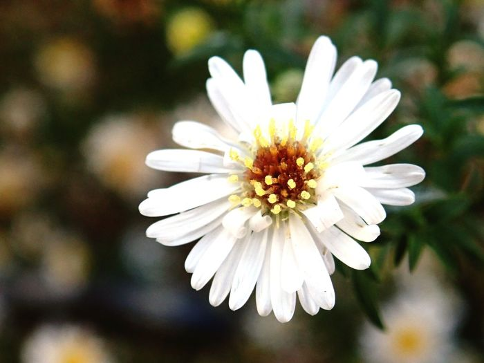 Flowers. Flower