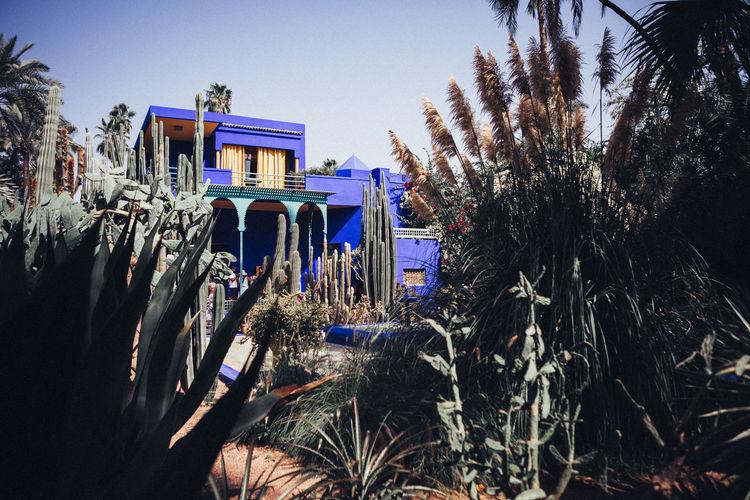 Architecture Cactus Nature Plants Yves Saint Laurent Abstract Building Exterior Color Jardin Majorelle Marrakech Morocco